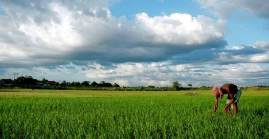 farmer-ict4d-india.jpg